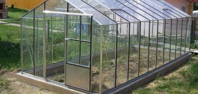Кущі та чагарники для саду 3