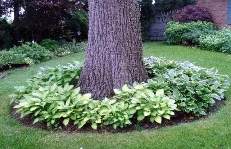 облаштування навколо дерева 5