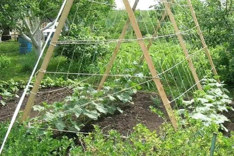 Як зробити шпалери для огірків і помідорів5