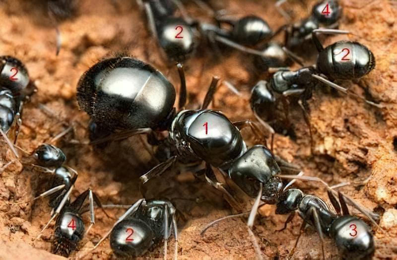 касти мурах