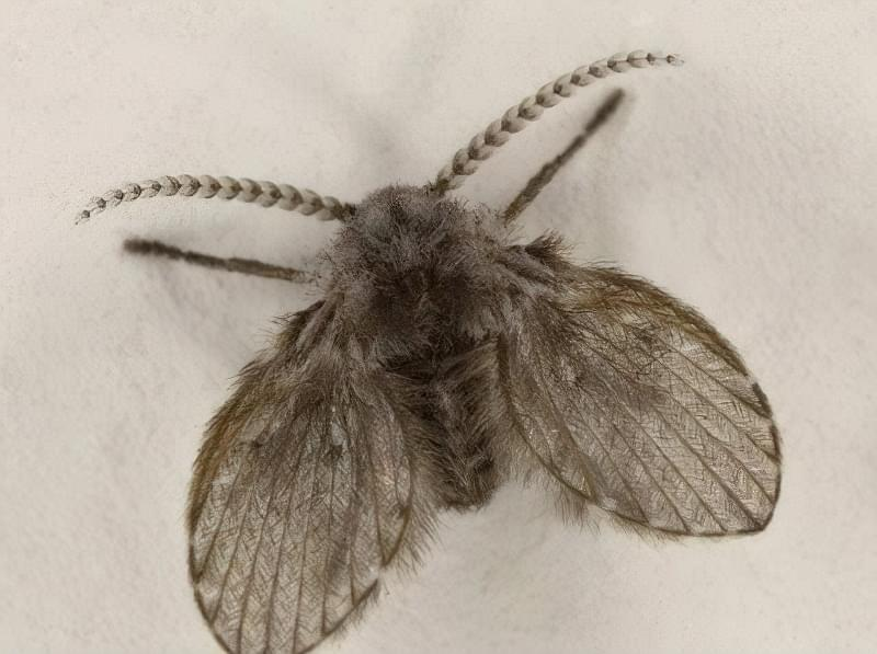 у ванній завелися комахи