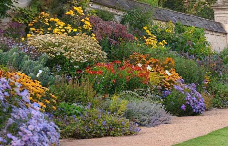 Невибагливі квіти і рослини багаторічники для саду 7