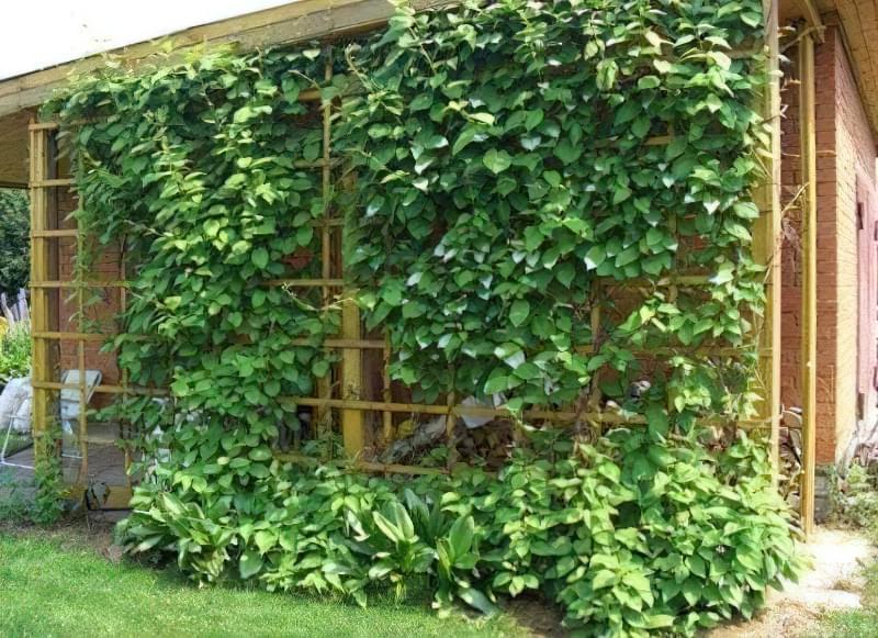 кущі для саду5.jpg12.jpg12434.jpg2342.jpg23