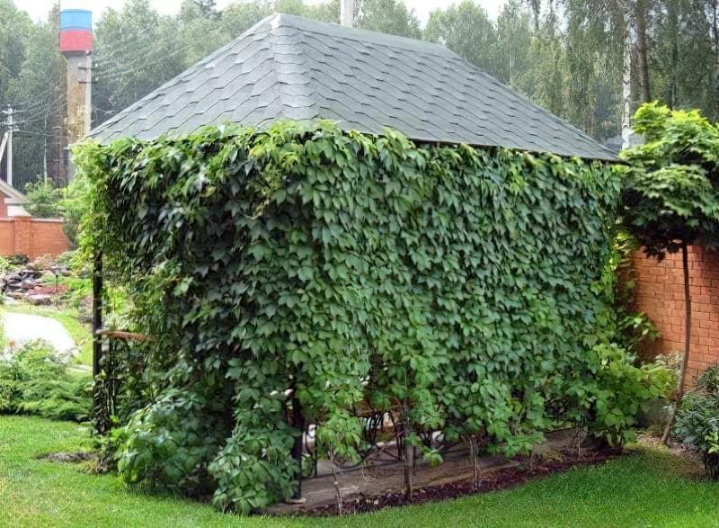 кущі для саду5.jpg12.jpg2344