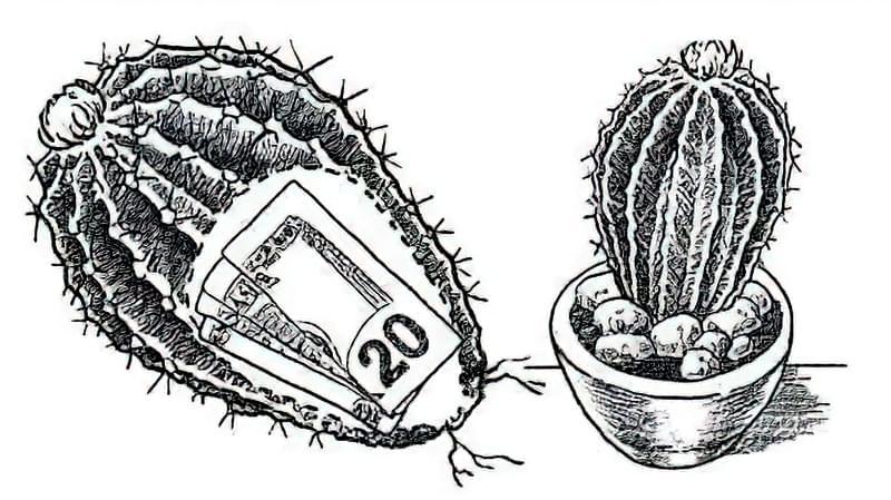 Схованка в кактусі