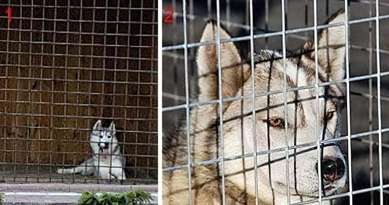 Вольєри для собак з гратами з сітки
