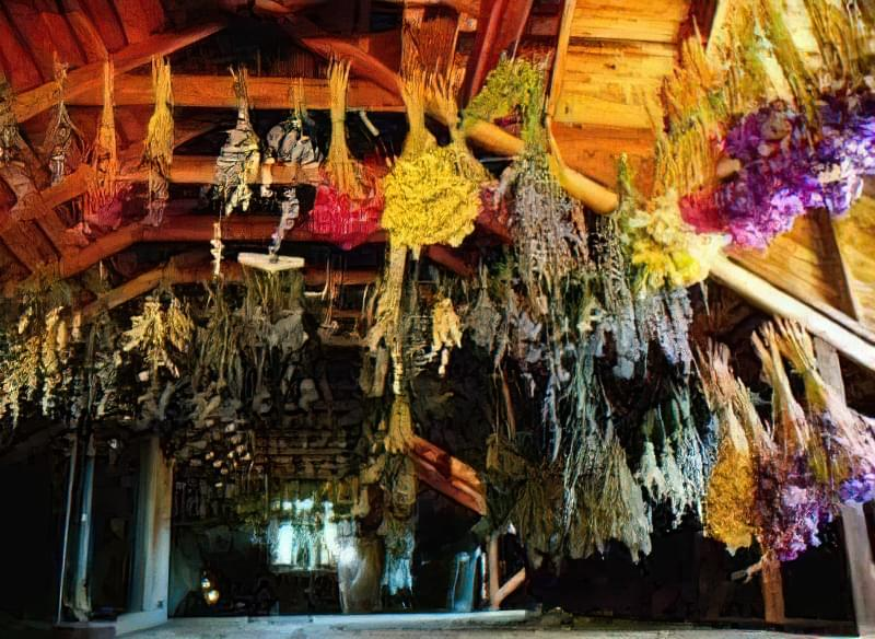Квіти-сухоцвіти: 20 найкрасивіших рослин і ідеї композицій 22