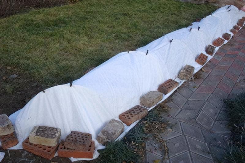 Укриття кущів лутрасілом, зафіксовано цеглинами