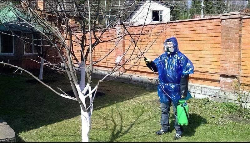 Обприскування фруктового дерева навесні