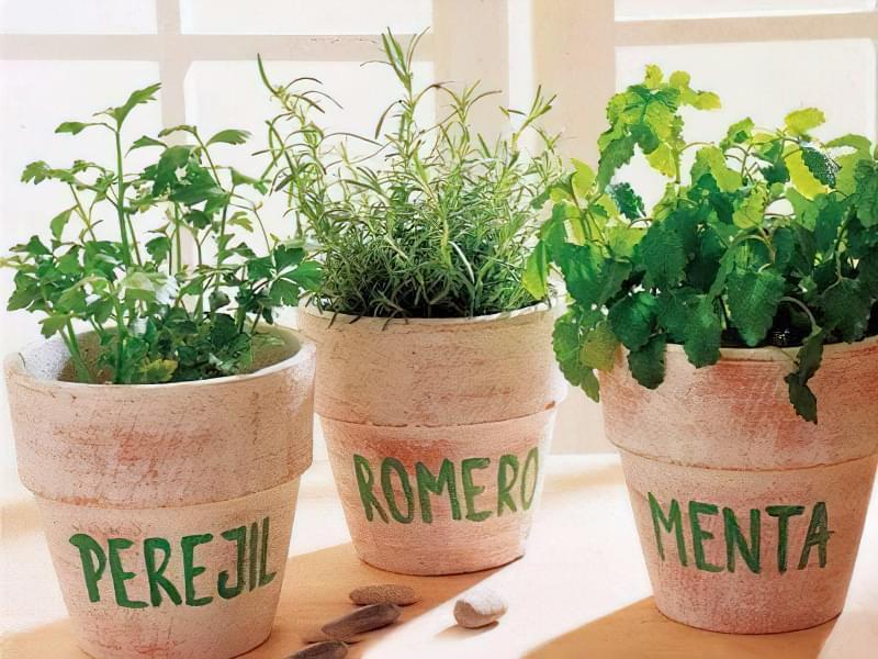 Вирощування зелені і салатів на підвіконнику