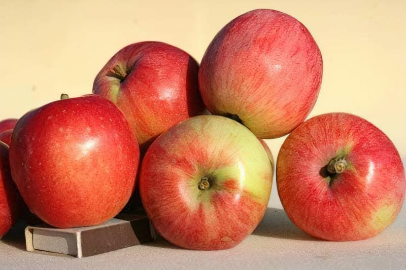 Обробка яблунь від хвороб: поради фахівців 1