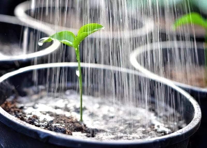 Правильний полив розсади баклажанів