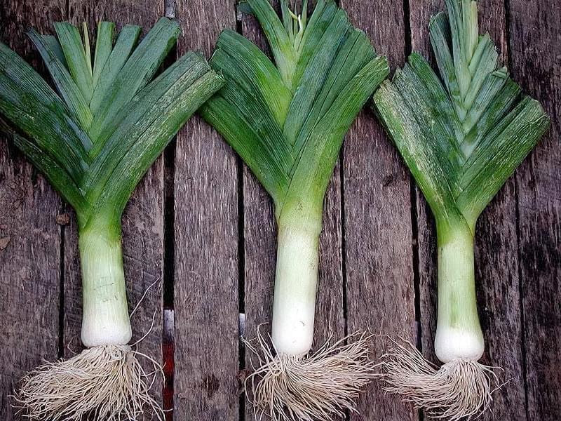 Цибуля порей можна вирощувати в домашніх умовах