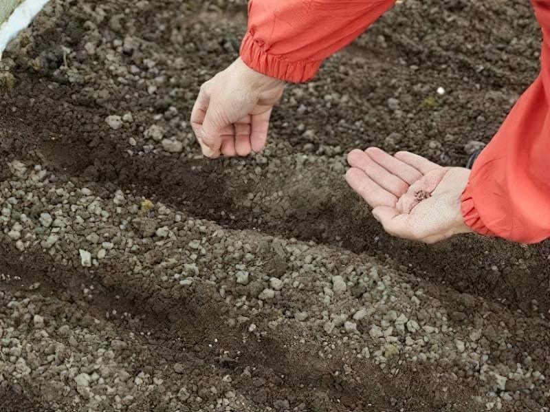 Посів насіння в підготовлений грунт