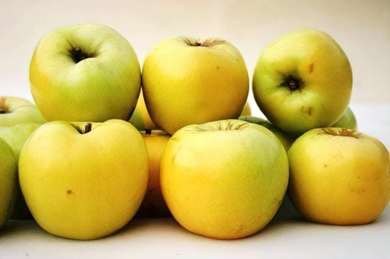 Плоди яблуні Антонівка звичайна