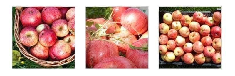 Урожай яблук в плетеному кошику Урожай яблук в траві Урожай яблук в ящику