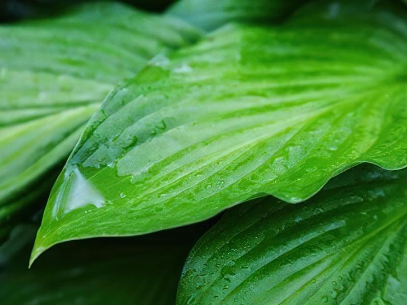 12 красивих і невибагливих рослин для саду 10