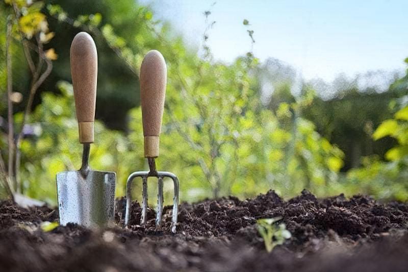 На початку серпня проводиться догляд за рослинами