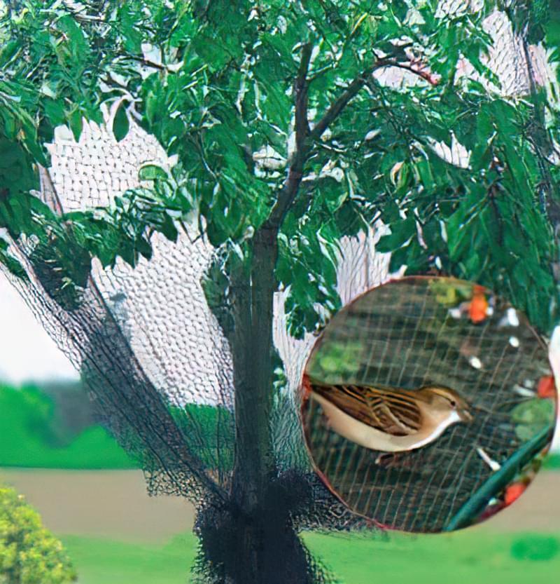 Як вберегти врожай в саду від птахів 3