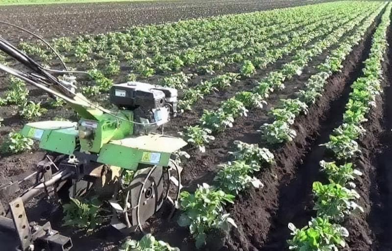 Підгортання картоплі мотоблоком: агротехнічне обгрунтування і нюанси процесу 3