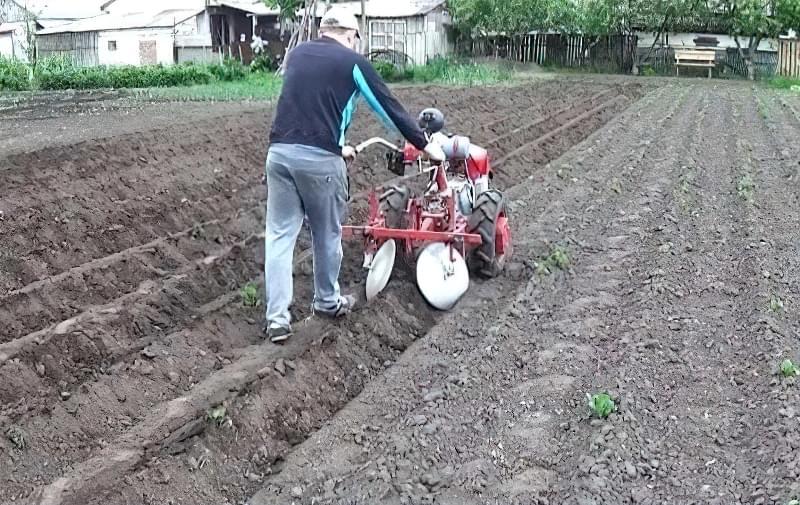 Підгортання картоплі мотоблоком: агротехнічне обгрунтування і нюанси процесу 4