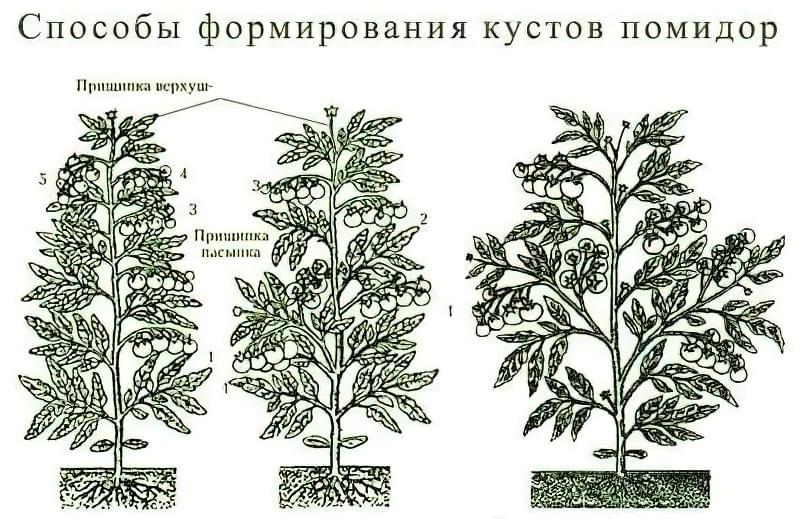Яка потрібна підгодівля для томатів у теплиці під час цвітіння 2