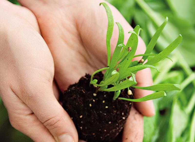 Які заморозки витримують посіви в городі 1