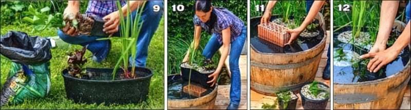 Міні-ставок своїми руками з дерев'яної діжки 5