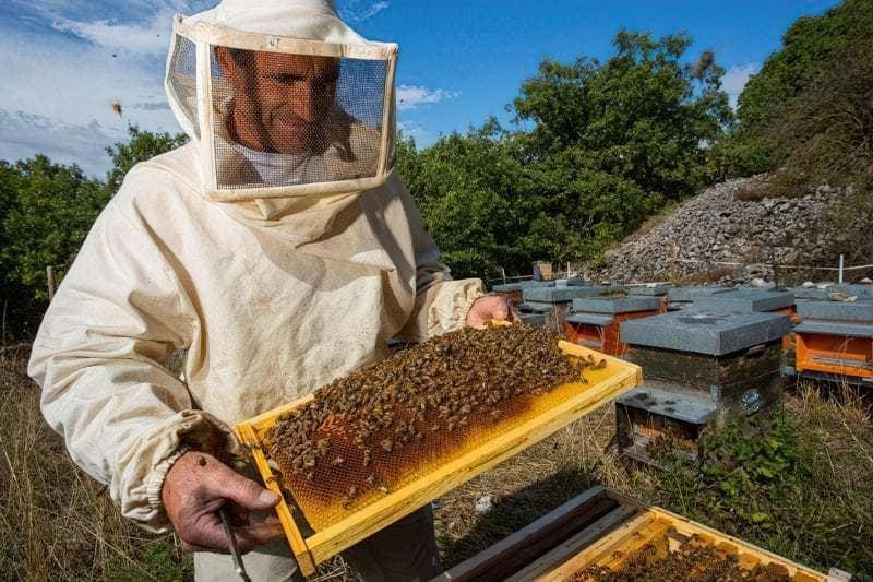 З чого почати бджільництво: інструкція для початківців