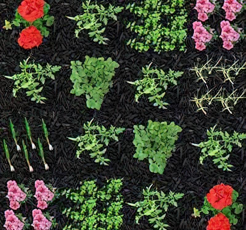 Змішані посадки: таблиця сумісності рослин 19