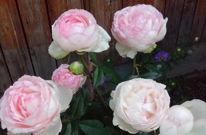 Букет до 1 вересня з дачних квітів 2