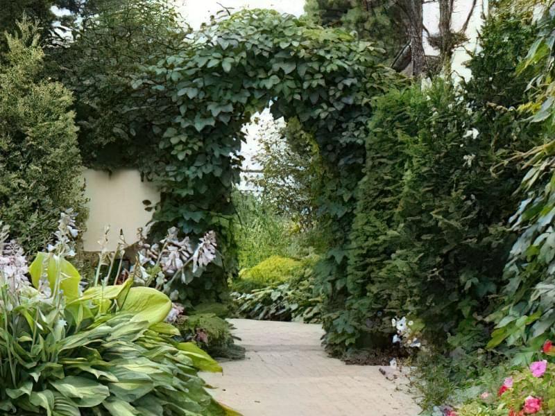 Рослини для квіткових арок 2