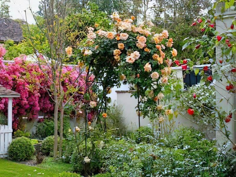 Рослини для квіткових арок 3