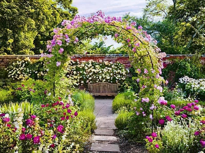 Рослини для квіткових арок 4