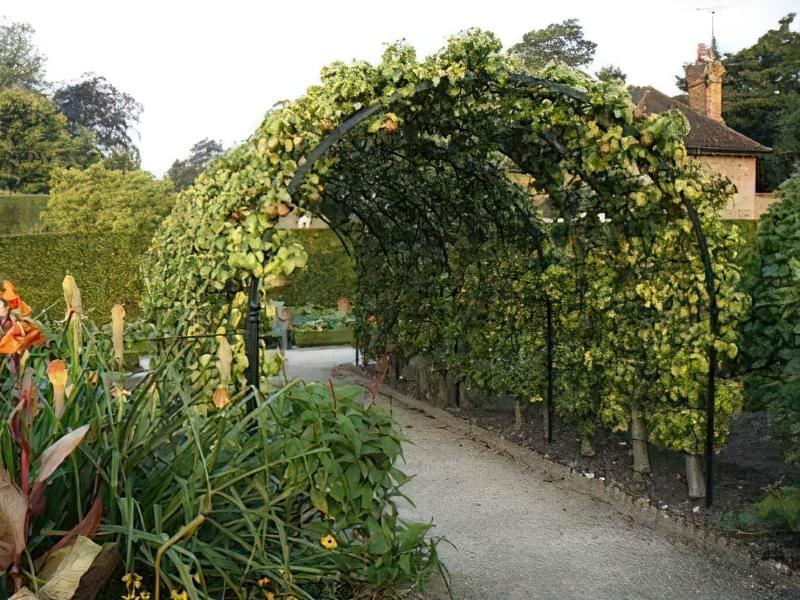 Рослини для квіткових арок 7