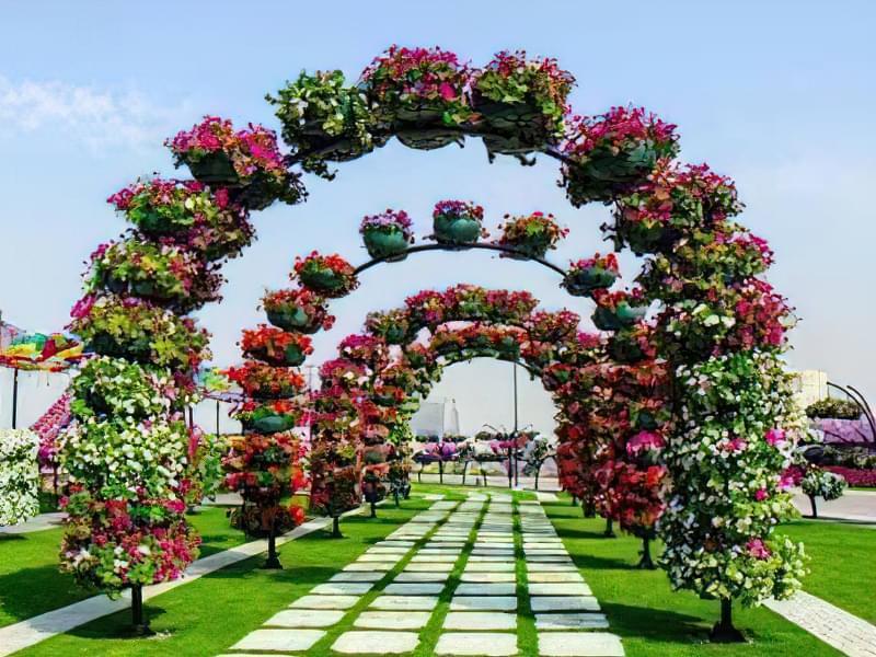 Рослини для квіткових арок 1