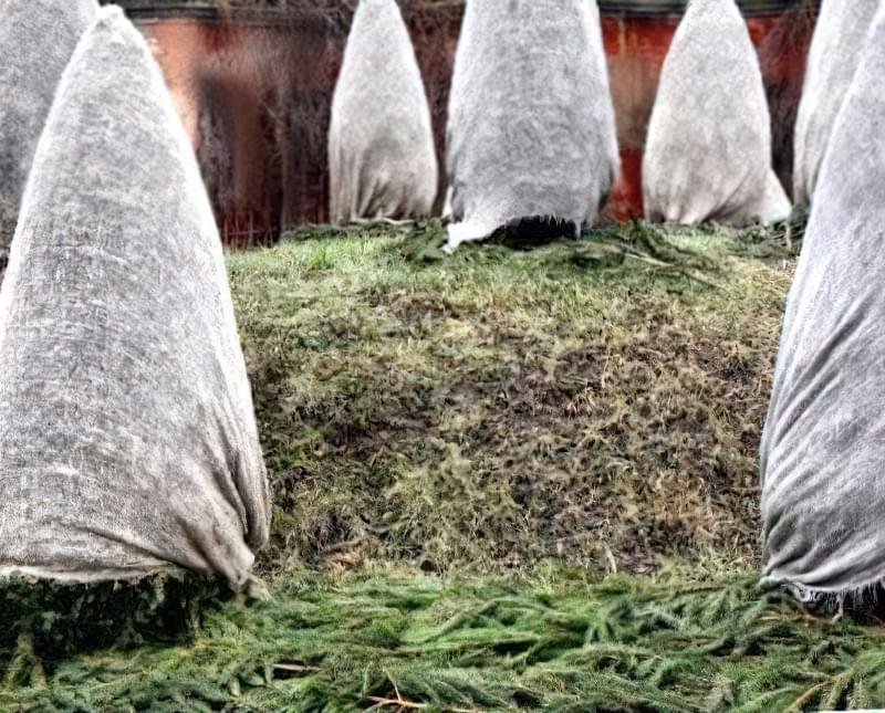 Укриття рослин на зиму 1