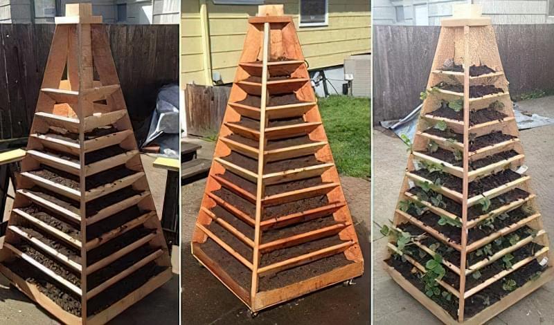 Вирощування полуниці в пірамідах 8
