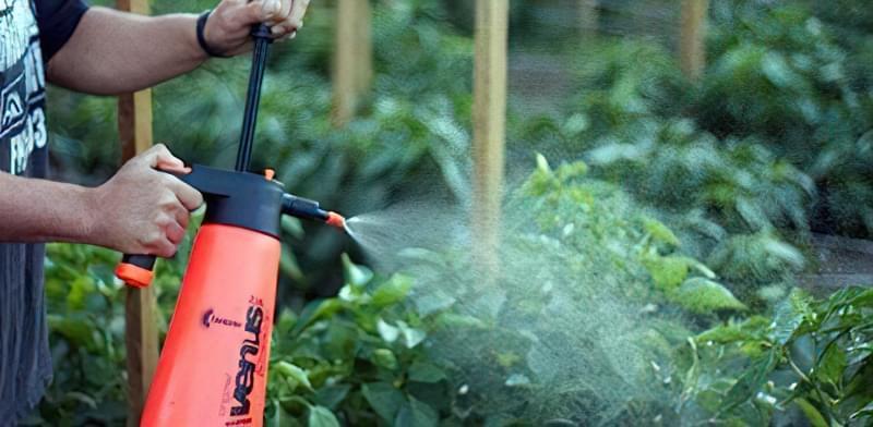 Янтарна кислота в городі і в саду 2