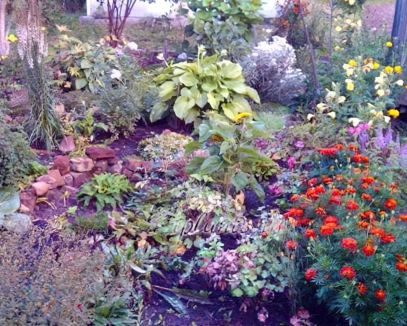 Які квіти посадити восени 2