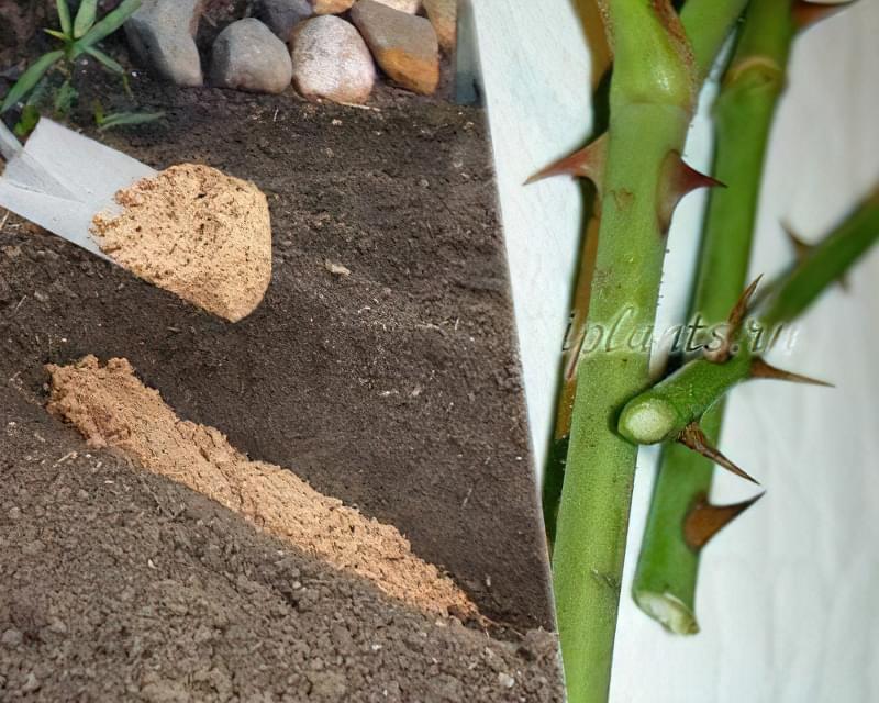 Які квіти посадити восени 3