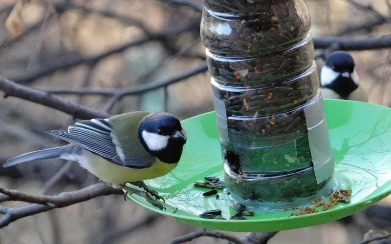 Як швидко і просто зробити годівницю для птахів з пластикової пляшки? 6