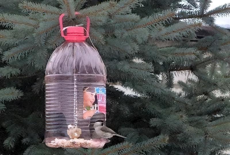 Як швидко і просто зробити годівницю для птахів з пластикової пляшки? 1