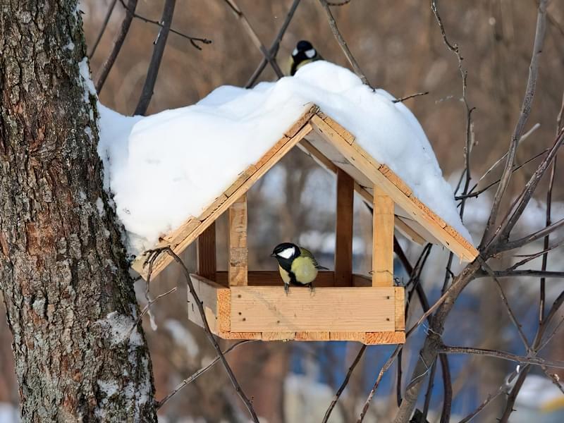 Що зробити, щоб птахи поселились в саду і біля дому 1
