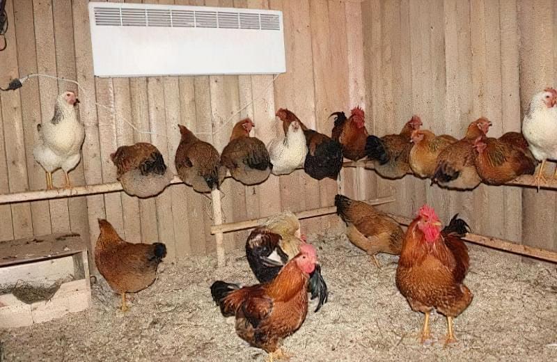 Спорудження зимового курника: планування, утеплення, обігрів 11