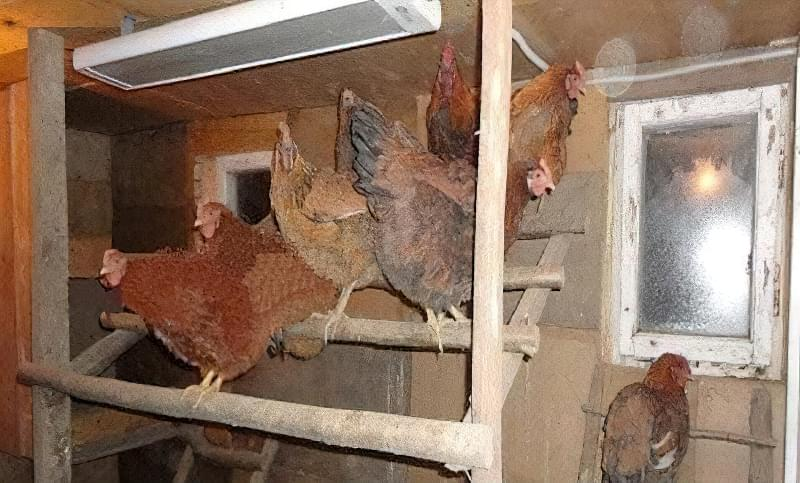 Спорудження зимового курника: планування, утеплення, обігрів 5