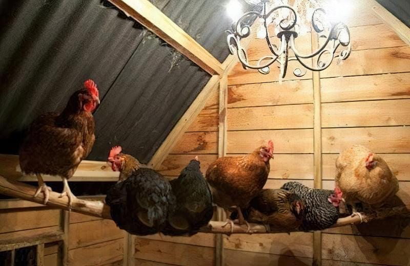 Спорудження зимового курника: планування, утеплення, обігрів 7