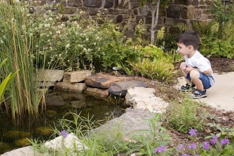 Як зробити ставок безпечним для дітей і дорослих? 1