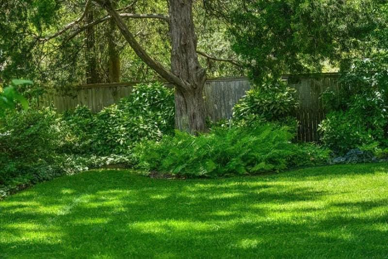Тіньовитривалий газон