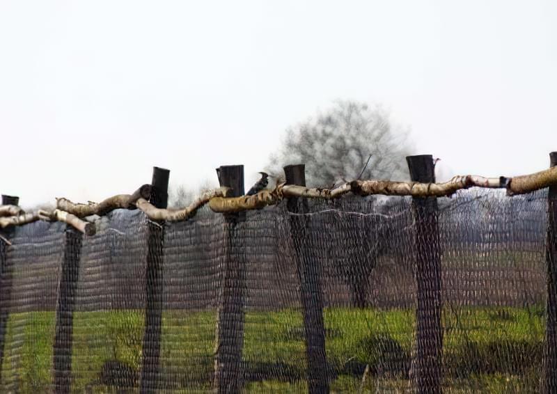 Як зробити паркан із сітки рабиці на дачі? 1